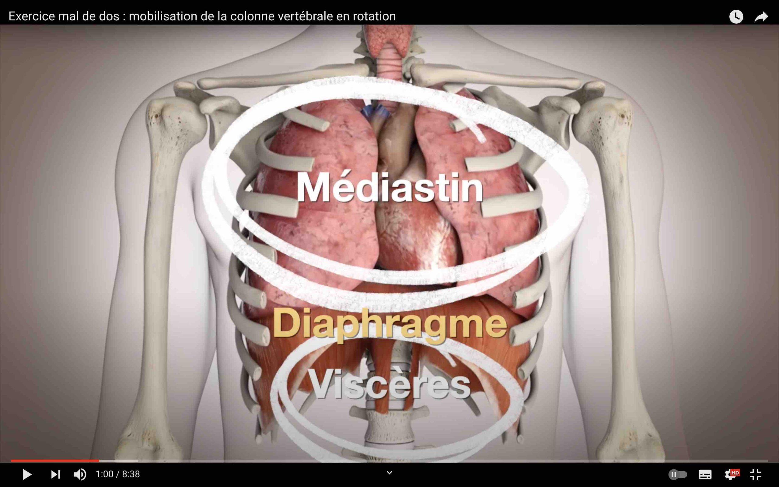 Position du diaphragme dans le corps