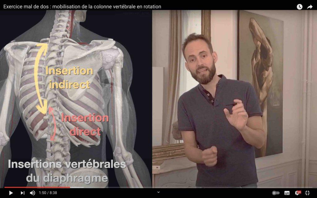 Le muscle diaphragme s'insère indirectement sur le rachis dorsal