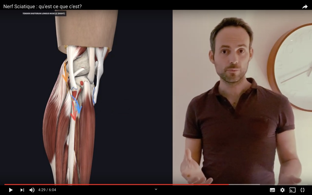 Vue de nerf fibulaire dans la partie haute de la jambe
