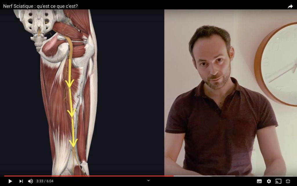 Position du nerf sciatique dans la cuisse
