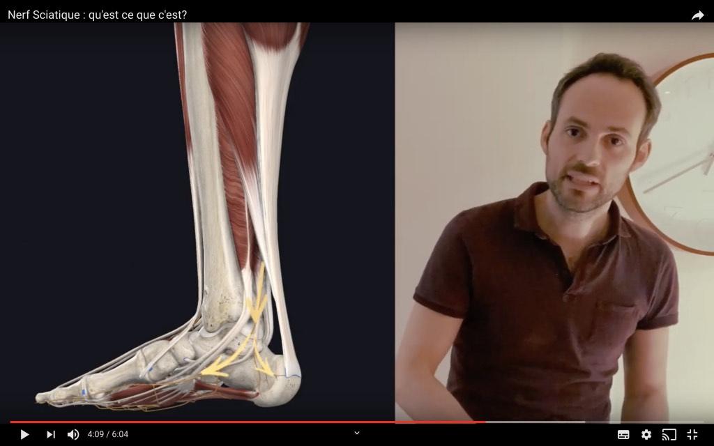 Trajet du nerf tibial dans le pied