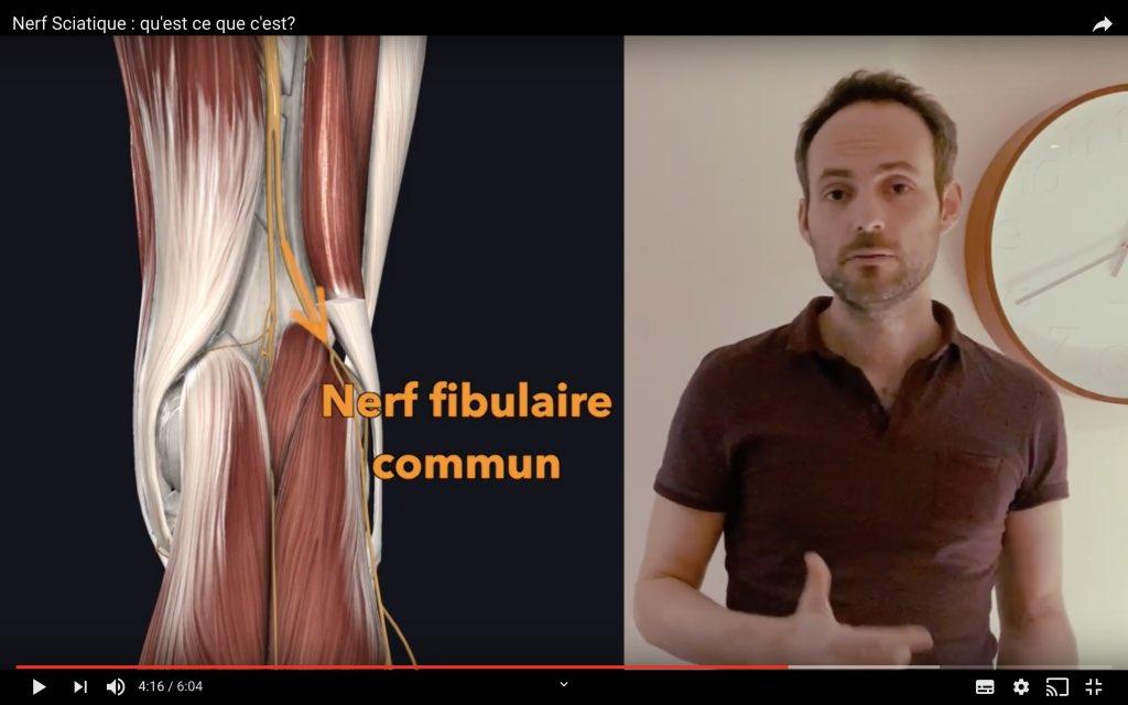 Naissance du nerf fibulaire