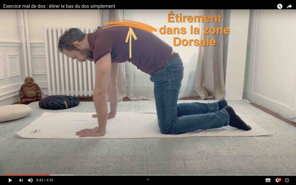 Exercice du chat dos rond