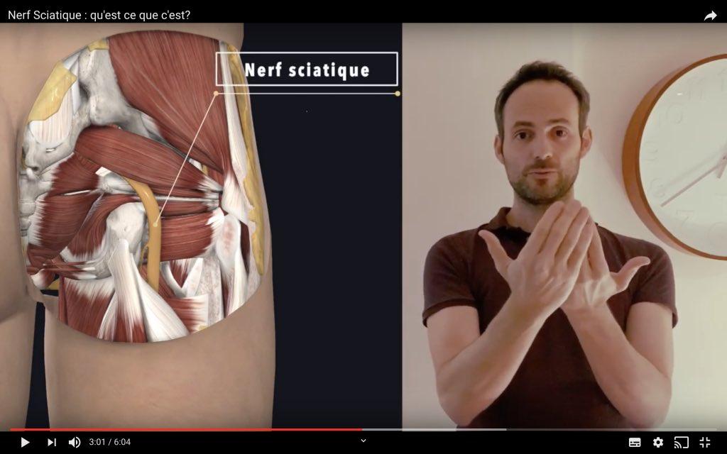 Trajet du nerf sciatique dans la fesse